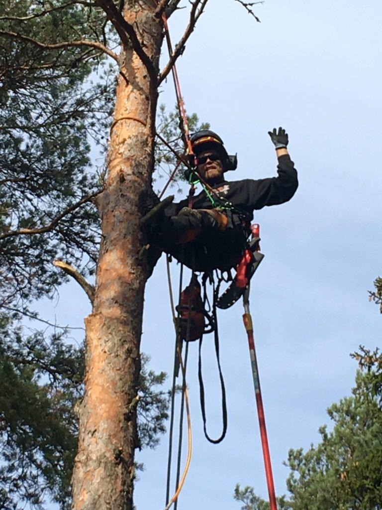 Mies heiluttaa puussa