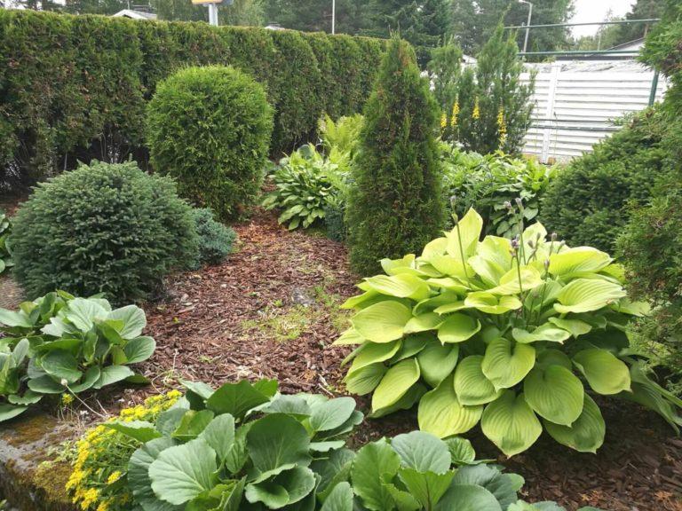 Vihreä puutarha