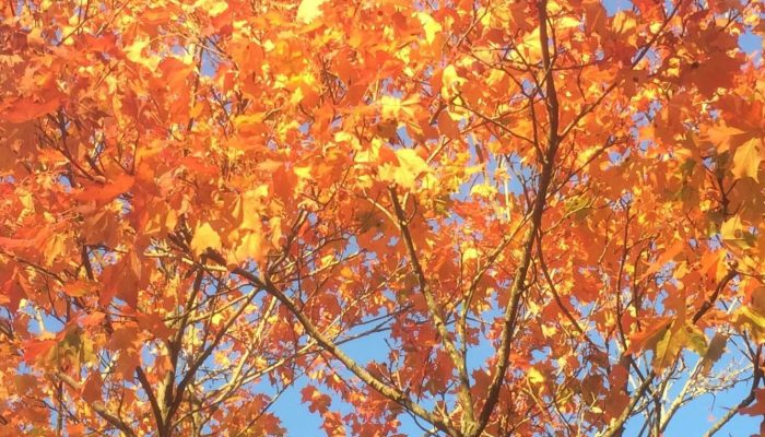 Syksyn värejä puussa